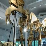 """Image for """"Noaptea cercetătorilor"""" te invită în culisele Muzeului """"Antipa"""""""